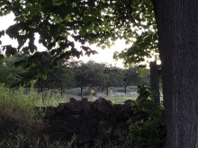 Stone wall & orchard behind