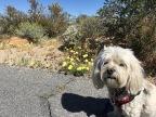Full Bloom – Joshua Tree National Park