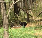 Chasing Bears